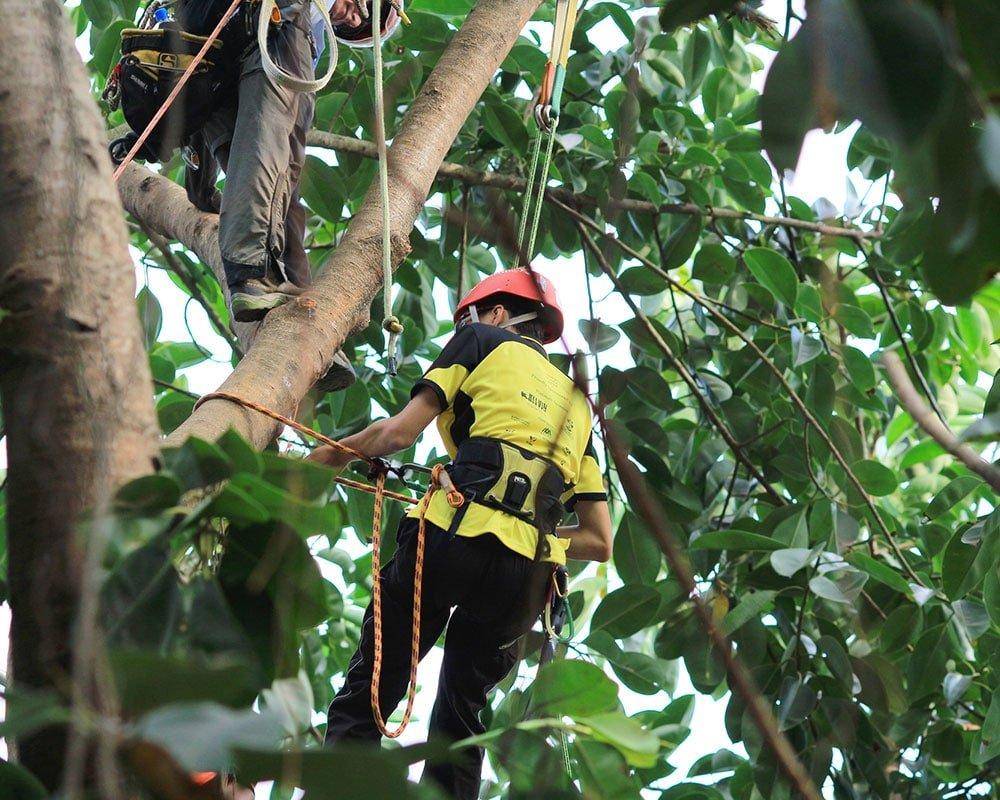 Tree Service Pickerington - Emergency Tree Removal